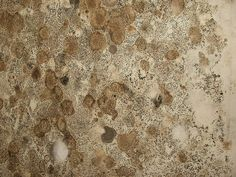 1000 Images About Mold On Pinterest Mildew Stains