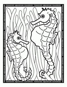 online seahorse coloring pages for grown ups - Cute Baby Seahorse Coloring Pages