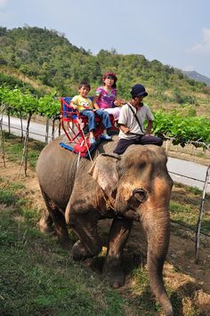 Elephant ride at Hua Hin Hills Vineyard, Hua Hin, Thailand