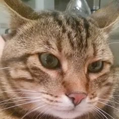 #buongiorno dal #gatto #goodmorning #cat #estate #summer #colazione #breakfast #mummi #stop
