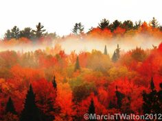 Sunrise Fog Adirondacks Mountains Forest by AdirondackMtnImages, $30.00
