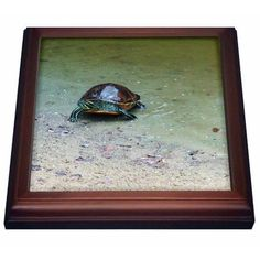 3dRose Tommy Turtle, Trivet with Ceramic Tile, 8 by 8-inch
