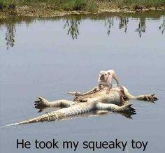 haha! he deserve it! #animals