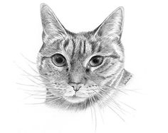 Tips To Drawing Realistic Pet Portraits