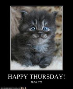 Happy Thursday | HAPPY THURSDAY! - Cheezburger