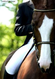 For that Classic Dressage Look...Try showing off that White Face with a pair of White breeches.. a real Show Stopper....