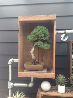 The New Backyard Cottage landscaping - small box with a bonsai tree. Behind, there are pipes to the house.