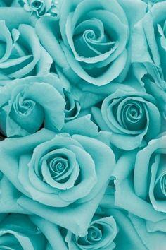 Aqua roses ✿⊱╮