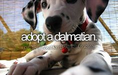 I had a Dalmatian when I was a kid, named her cupid because of the biggest spot on her was shaped like a heart. I love Dalmatians & I'll get another one at some point of my life!!