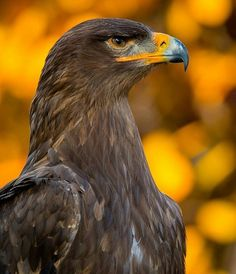 Golden Eagle King of the sky Follow @world_inside for traveling around the globe together. Thank you   Photo by @unknown