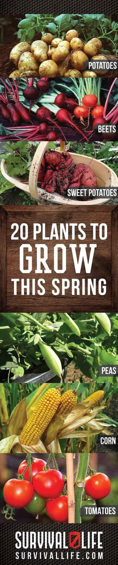20 Plants To Grow This Spring | DIY Survival Gardening Ideas By Survival Life. http://survivallife.com/2015/03/02/survival-gardening-for-spring/