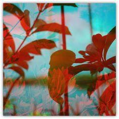 Photography canopy two | nicolasquelquechose