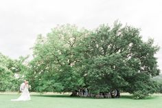 tree wedding ceremony | Image by Jacob and Pauline Photography