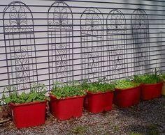 vegetable gardening in containers | Gardening Tips for Small Spaces: Vegetable Growing in Containers ...