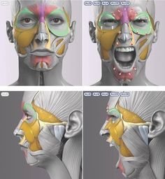 Exceptional Drawing The Human Figure Ideas. Staggering Drawing The Human Figure Ideas. Anatomy Head, Facial Anatomy, Human Anatomy Drawing, Anatomy Poses, Body Anatomy, Anatomy Art, Face Muscles Anatomy, Zbrush Anatomy, Facial Muscles
