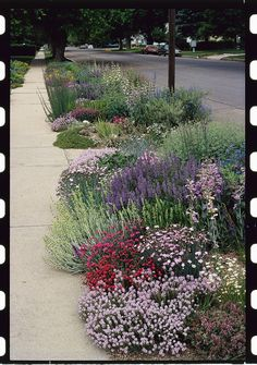 Gardening in the Parkway Strip | Turn that space by the curb into a spot of beauty that needs little care