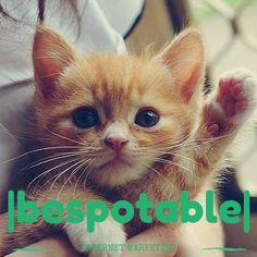 hello!! |bespotable|