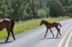 Donkey, Rocky Mountains, New Mexico, More Photos, Lincoln, Hamilton, Skiing, Wildlife, Old Things