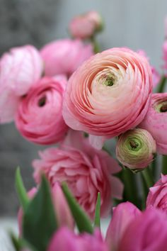 A Bunch for the Weekend-# Pink Flowers-Ingrid Henningsson-Of Spring and Summer A bouquet for the weekend – No. 76 – Three pink flowers – Ingrid Henningsson – for spring and summer … Blue Peonies, Pink Tulips, Pink Flowers, Exotic Flowers, Pink Roses, Yellow Roses, Fresh Flowers, Beautiful Flowers, Ranunculus Flowers