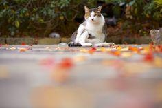 https://flic.kr/p/B3afkD | Today's Stray cat