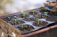I want to touch you garden! Plants, Seedlings, Succulents, Garden