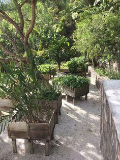 The herb and vegetable garden Atitlan Guatemala, Lake Atitlan, Luxury Villa, Hotels And Resorts, Vegetable Garden, Herbs, Patio, Adventure, Vegetables