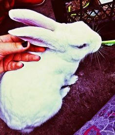 That's not my pet. My aunt's pet. But I love rabbits too.