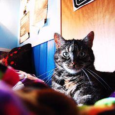 What a cutie  #viiruthecat #instacats #catsofinstagram #cats