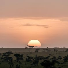 The sun slowly rises above Tanzania and a new day begins. Slow Travel, Us Travel, Rise Above, Tanzania, Luxury Travel, Travel Photos, Asia, Around The Worlds, Journey