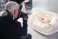 Lagerfeld's cat to front new Shue Eumura's new campaign.