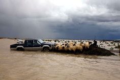 A farmer is supporting a flock of sheep trapped by flooding in Darzeze (Albania), on 2 February.  Heavy rains have forced thousands to evacuate their homes, and many roads were left submerged.