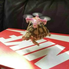 mini quadcopter flying and carrying the tortoise #gptoys #993