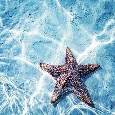 Estrella del Mar, Mexico Under The Water, Under The Sea, Photo Animaliere, Deep Blue Sea, Marine Biology, Tier Fotos, Underwater World, Sea World, Ocean Life