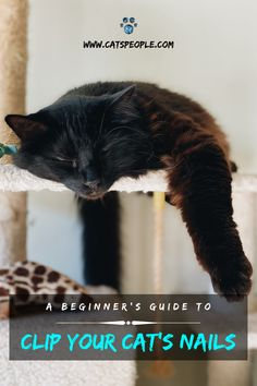 Trimming your cat's claws can be a hassle, especially if your cat won't sit still to get the job done. It is an essential part of your beloved pet's grooming, and if left undone, it might cause problems in the future. Here is everything you need to know about clipping your cat's claws. #cat #cats #catowner #catlover #catblog #catspeople #healthycat #catclawclipping #catclawtrimming #catnail #catnailclipping #catnailtrimming #nailclippers #catmom #catdad #catlady #grooming #catclaw #catgrooming Trim Cat Nails, Cat Water Fountain, Interesting Topics, Cat Dad, Cat Names, Cat Grooming, Cat Health, Cool Cats