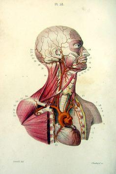 1852  Vintage Human Head Anatomy print by LyraNebulaPrints on Etsy, $32.50