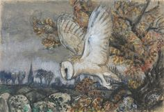 Barn Owl flying, Old Brampton Church beyond