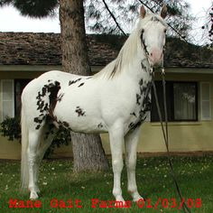 Paint Horses For Sale In Wv