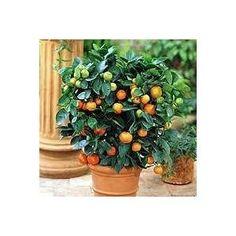 5 Easy To Grow Indoor Fruit Trees