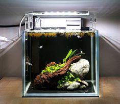 Betta Aquarium, Nano Aquarium, Aquarium Design, Aquarium Landscape, Nature Aquarium, Fish Tank Themes, Nano Cube, Aquascaping, Colorful Fish