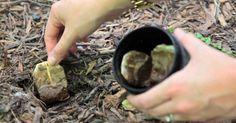 Warum vergräbt sie ihre Teebeutel im Garten? Was für ein genialer Trick! | Ralf | Pinterest | Garten, Oder and Ph