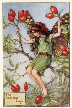 This beautifull Rose Hip Flower Fairy Vintage Print by Cicely Mary Barker was printed c.1927 and is an original book plate from and early