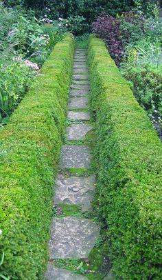Boxwood hedges by didurkes, via Flickr