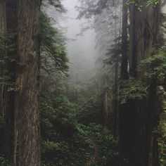 A small trail leads into the foggy Del Norte forest. by kevinrussmobile, via Flickr