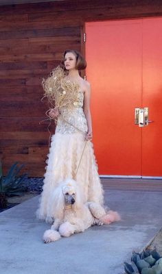 Poodles make awesome Prom Dates!