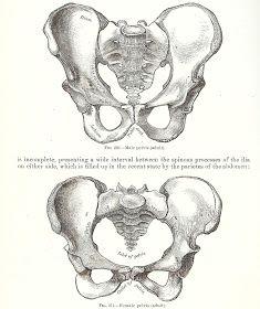 da anatomi c pelvis kvinde p .