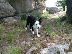 Druidenstein bei Kröblitz - #Finlay #bordercollie #collie #dogs #Hund #Welpe #Puppies #Puppy #dogstagram #dogsofinstagram #loved #adorable #beautiful #cute #puppy #dog #bordercolliesofinstagram #borderfame