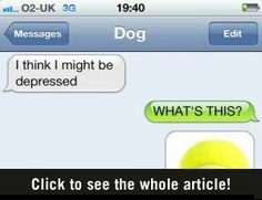 These text messages between a dog and owner were amazing!  I couldn't stop laughing; each one was funnier and funnier.