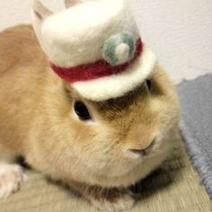 Capped bunny