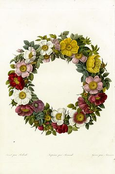 Antique botanical print of a wreath for use on gift tags and invitations.