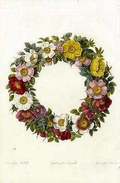 Antique botanical pr